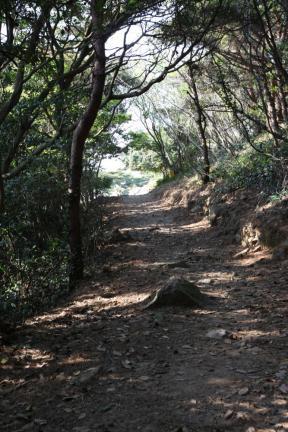 홍도천연보호구역 마을2구 등대가는길(동백숲)