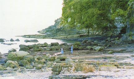 사도공룡화석지전경