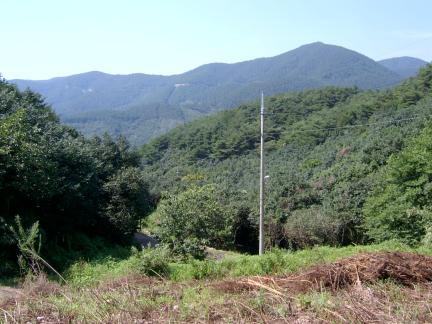 옥룡사지에서 바라본 동백나무 숲