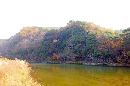 영양 감천리 측백나무 숲