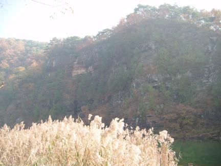 영양 감천리 측백나무숲