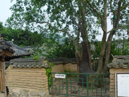 경주 독락당 조각자나무