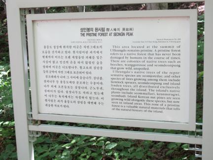 울릉 성인봉 원시림
