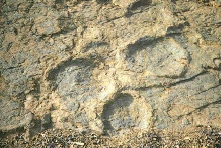 공룡발자국화석(발굽울트라룡)