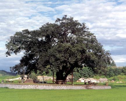황목근전경