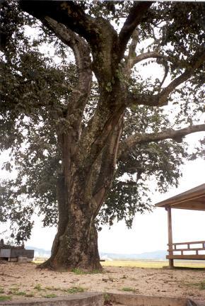 황목근의줄기