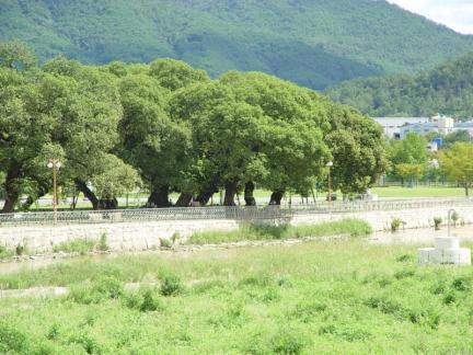 성주 경산리 성밖숲