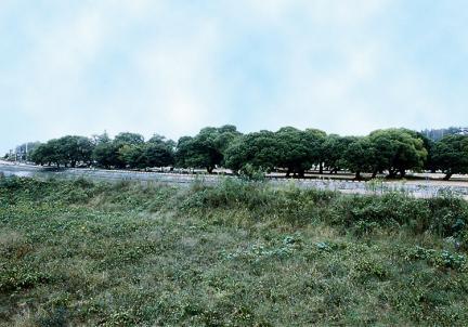 성주경산리의성밖숲1380년대(추정)