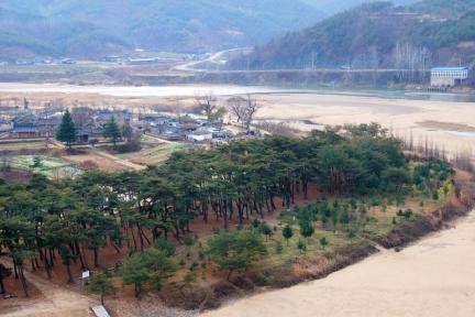 안동 하회마을 만송정 숲