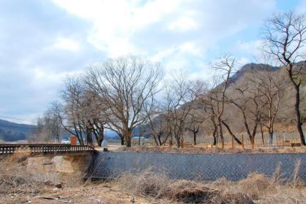 영양 주사골 시무나무와 비술나무 숲