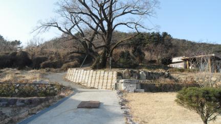 김해 천곡리 이팝나무