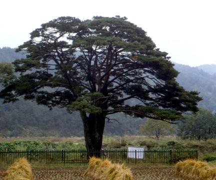 함양목현리의구송
