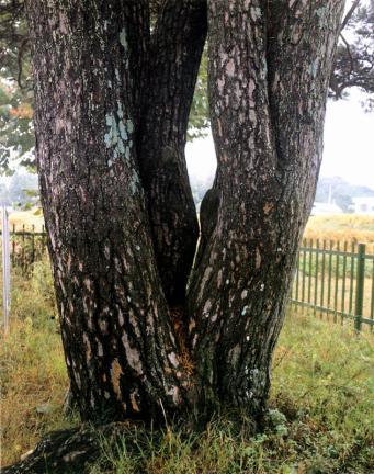 함양목현리의구송줄기
