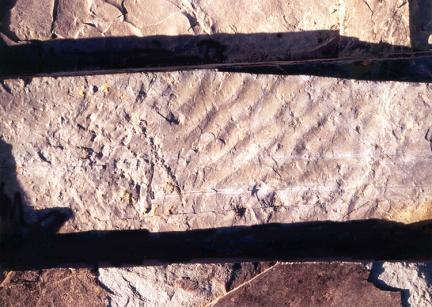 물결모양(연흔)화석
