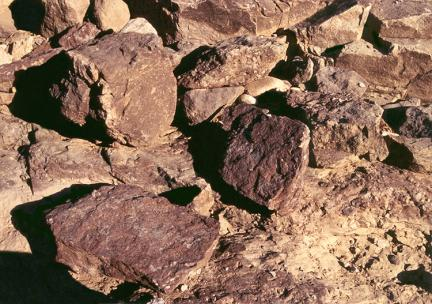 뼈화석채취전암석