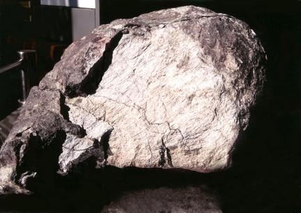 뼈화석에나타난조직