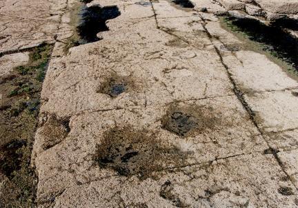 공룡발자국화석