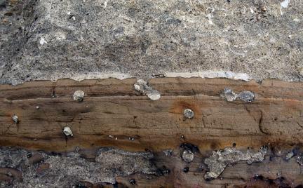 제주서귀포층패류화석산지