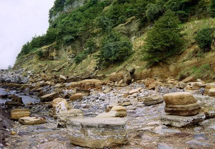 패류화석층(서귀포)