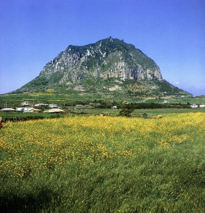 산방산암벽식물지대