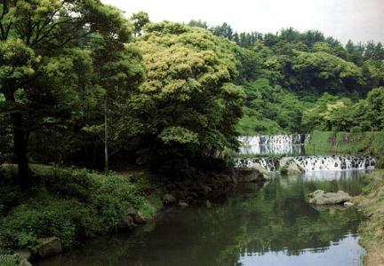천지연난대림지대