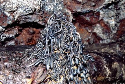 용천동굴 용암석순