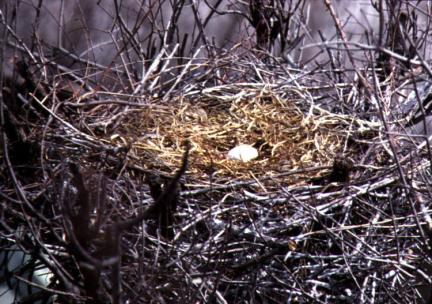 황새알(충북음성)