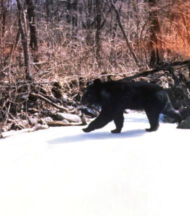 반달가슴곰