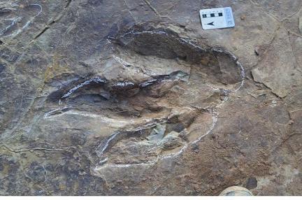 대형 수각류 발자국 화석
