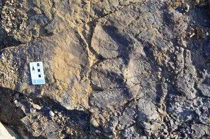 조각류 발자국