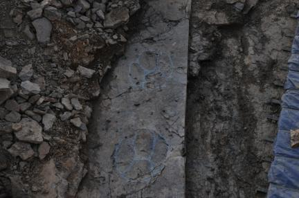 초대형 조각류 발자국 화석