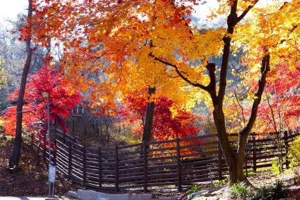 홍련사 입구 백악산 등산로입구 가을단풍