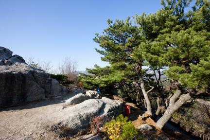 백악산 정상 소나무밑 휴게소