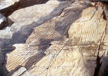 물결자국화석