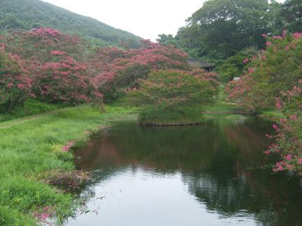 명옥헌 원림 연못 전경