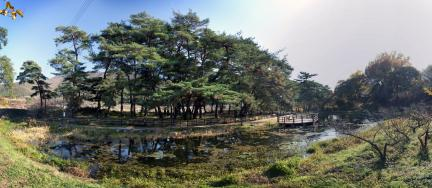 덕동숲 전경