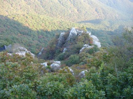 기임괴석과 낙엽수림
