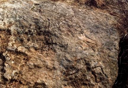 칠포리암각화