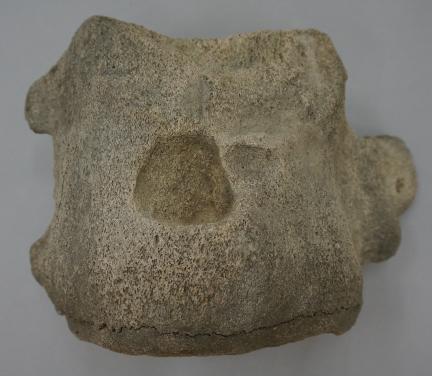 골촉박힌 고래뼈(울산박물관)