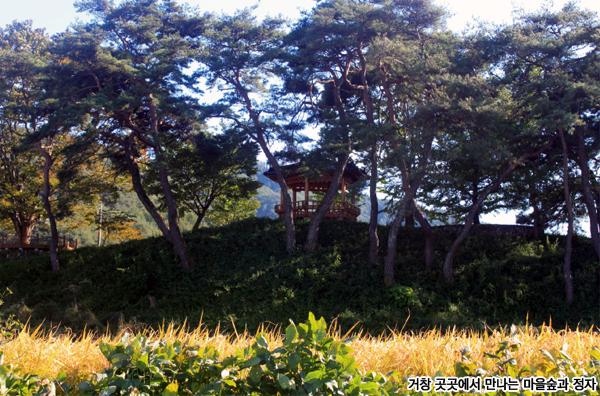 거창 곳곳에서 만나는 마을숲과 정자