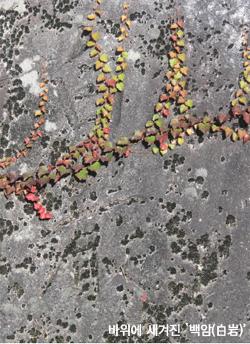 바위에 새겨진 백암(白岩)