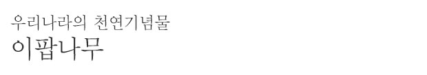 순천 평중리 이팝나무(천연기념물 제36호) ⓒ문화재청