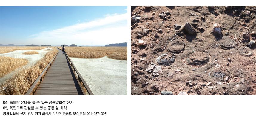 04.독특한 생태를 볼 수 있는 공룡알화석 산지 05.육안으로 관찰할 수 있는 공룡 알 화석. 공룡알화석 산지 위치 경기 화성시 송산면 공룡로 659 문의 031-357-3951